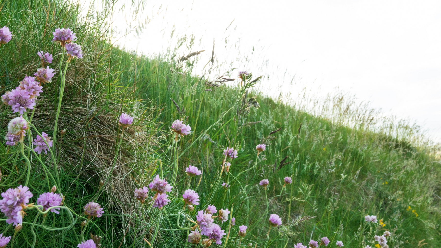 Wildflowers along the Cliff Walk.